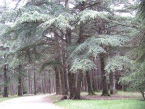 Azrou forêt des cèdres